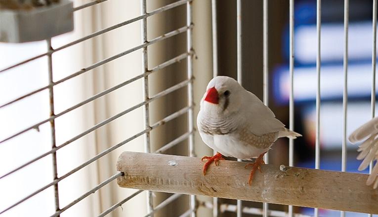 Betty Drescher heeft gezelschap van haar vogels